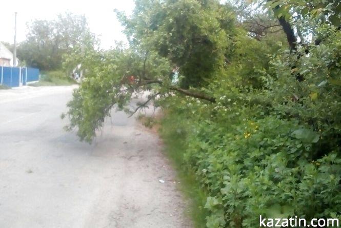 Фото дня: дерево на дротах та гілки на дорозі