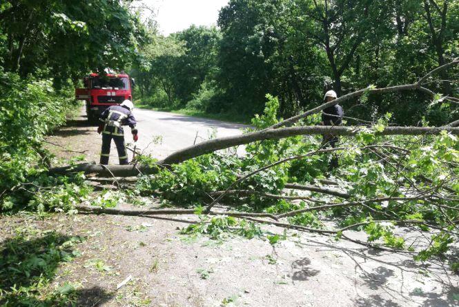 Повалені дерева на Козятинщині: рятувальники ліквідовують наслідки негоди
