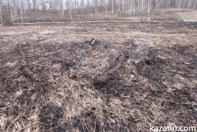Коли зазеленіє Копитовський ліс?