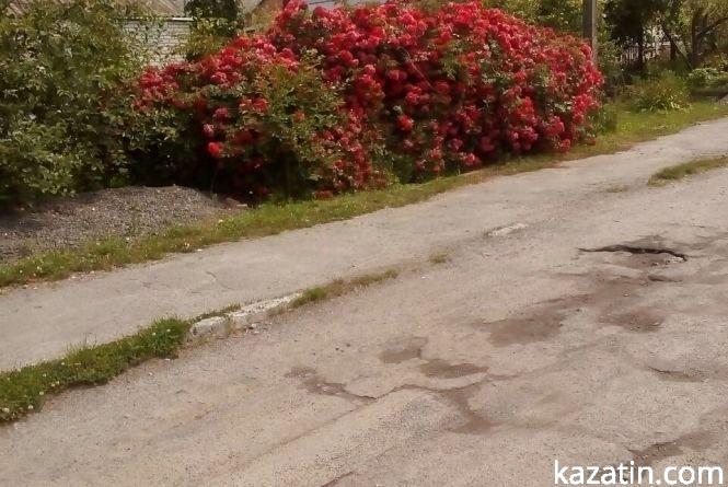 Фото дня: Козятин квітне трояндами