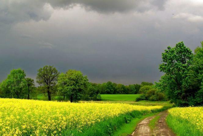 «Вихідні в Україні будуть всякими»: де гримітимуть грози та похолодає ще більше?