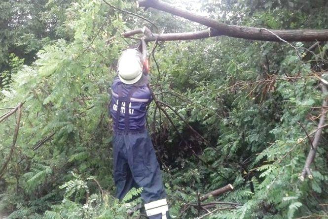 Спецоперація рятувальників: в селі Козятин дерево впало на дорогу