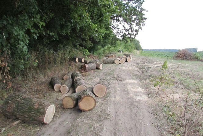 Санітарну вирубку в Махаринецькому лісі завершено