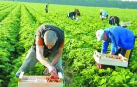 Чи вигідні заробітки у Польщі