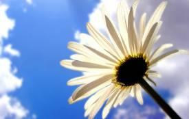 Яка погода пануватиме сьогодні, 14 серпня, у Козятині?
