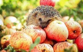 Сьогодні, 19 серпня —Яблучний Спас: прикмети і традиції
